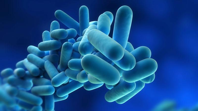legionella-pneumophila-(bacteria)
